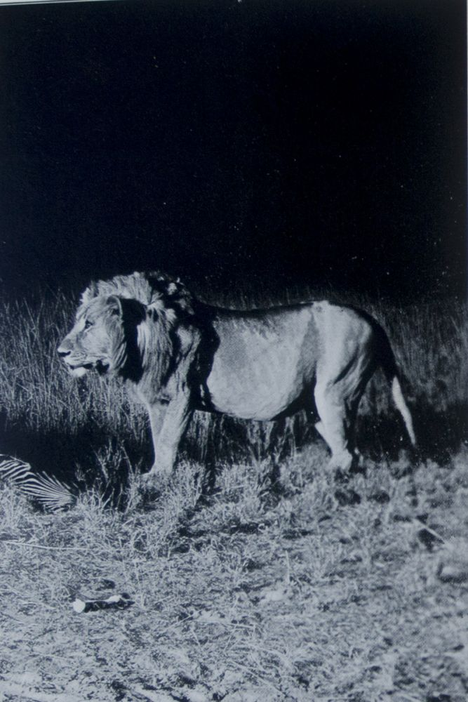 Camera Adventures in the African Wilds Being an Account of a Four Months' Expedition in British East Africa, for the Purpose of Securing Photographs of the Game from Life. A. Radclyffe Dugmore.