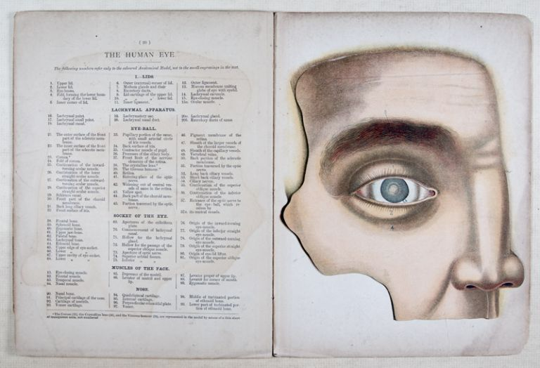 The Human Eye and Its Auxiliary Organs. H. Renlow, John Browning, Hermann, intro and.