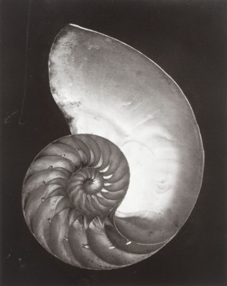 Edward Weston: His Life and Photographs [SIGNED] [WITH AN ORIGINAL SILVER PRINT IN A CARDBOARD SLEEVE]. Edward Weston.