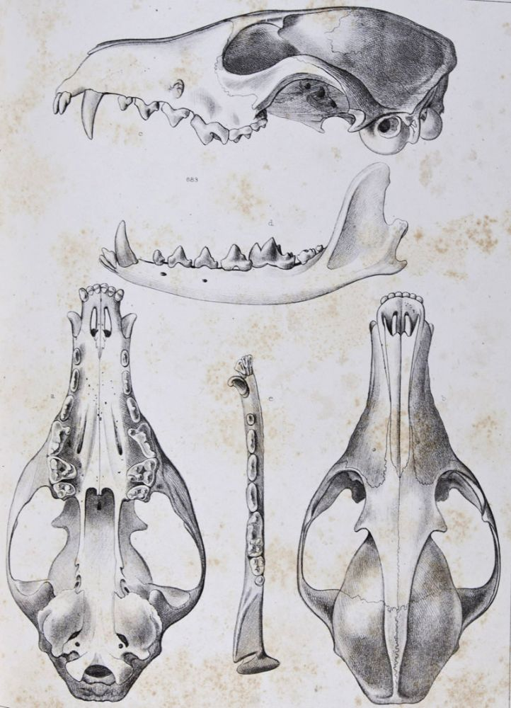 Reports of Explorations & Surveys, to Ascertain the Most Practicable & Economical Route for a Railroad from the Mississippi River to the Pacific Ocean, . . . in 1854-6. Volume VIII. General Report Upon the Zoology of the Several Pacific Railroad Routes: Part I. Mammals. Spencer F. Baird.