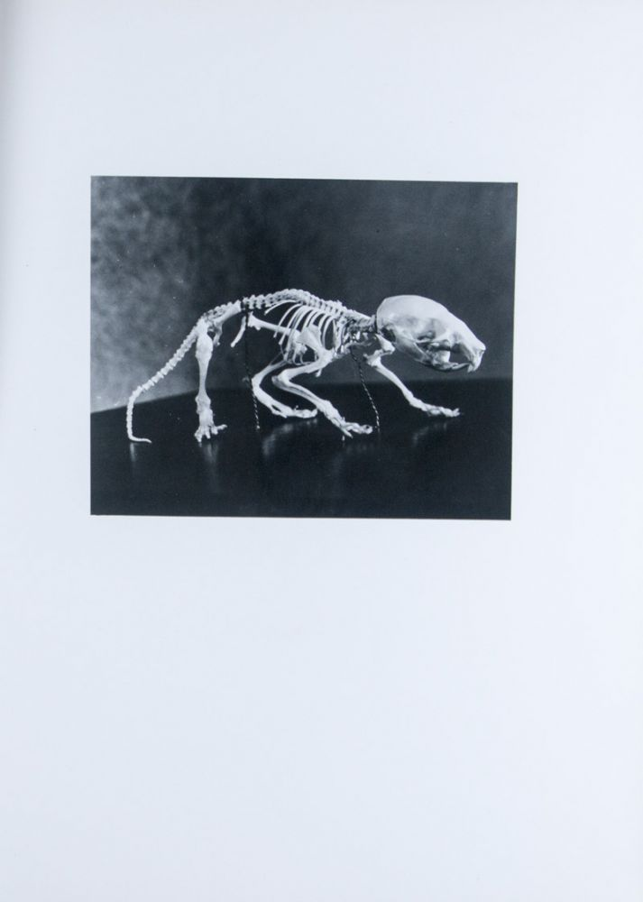 Atlas of the Skeletal Development of the Rat (Long-Evans Strain X-Ray Photographs) Normal and Hypophysectomized. 2 Vols. [INSCRIBED]. Hermann Becks, Herbert M. Evans.