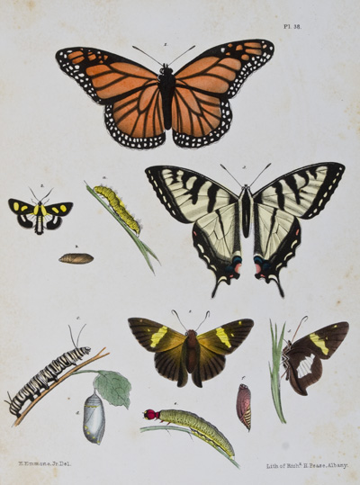 Agriculture of New York: Comprising an Account of the Classifications, Composition and Distribution of the Soils and Rocks, and of the Climate and Agricultural Productions of the State; Together with Descriptions of the More Common and Injurious Species of Insects; Volume V. E. Emmons.