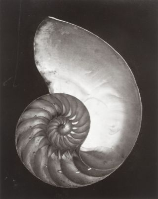 Edward Weston: His Life and Photographs [SIGNED] [WITH AN ORIGINAL SILVER PRINT IN A CARDBOARD...