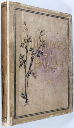 Wild Flowers of the Holy Land