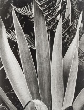 Time in New England. Paul Strand, Nancy Newhall, Paul Metcalf, Beaumont Newhall, Texts selected and