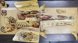 White's Physiological Manikin, First Edition [WITH] First Edition, Second Printing [2 vols]